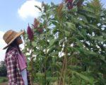 【半農半Xという生き方】私が奈良へ移住した理由